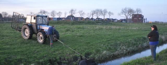 BUITENPOST – Maandagavond is er een jonge stier uit een weiland langs de Lauwersmeerweg onder Buitenpost in een sloot geraakt. Een oplettende automobilist zag dit en belde de meldkamer. De […]