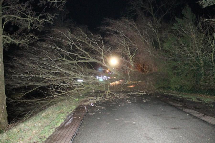 Photo of Brandweer Kollum verwijdert omgewaaide boom op Trekweg