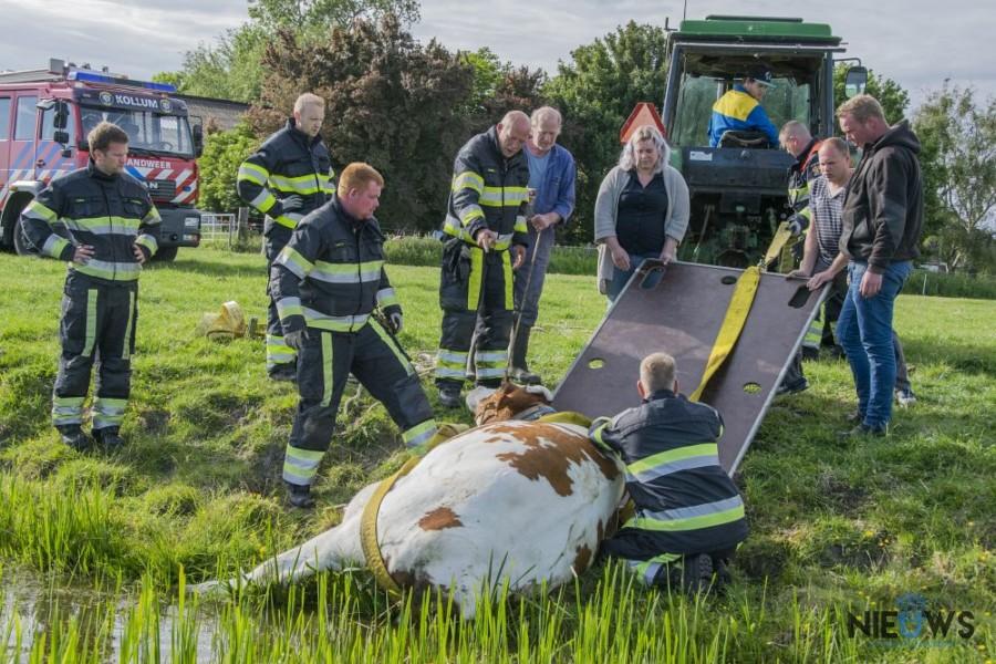 Photo of Brandweer redt hoogzwangere koe